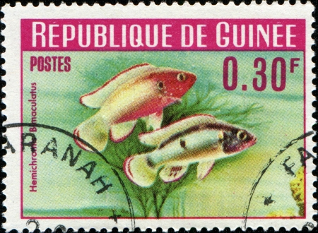 guinee: GUINEE - CIRCA 1964  A stamp printed in Guinee shows fish Jewel cichlid - Hemichromis, circa 1964  Stock Photo
