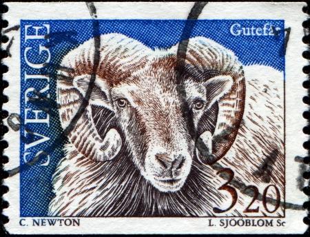 SWEDEN - CIRCA 1997  A stamp printed in Sweden shows a Gotland sheep, circa 1997  photo
