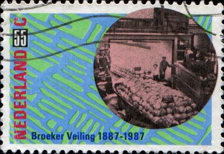 NEDERLAND - CIRCA 1987 Een stempel gedrukt in Nederland ter ere van 150e verjaardag van Groningen Agricultural Society, laat Veiling in Broek op Langedijk, circa 1987