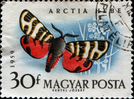 HUNGARY - CIRCA 1959  A postage stamp printed in Hungary shows a Tiger Moth  Arctia Hebe , circa 1959 photo