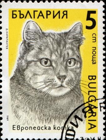 BULGARIA - CIRCA 1989  A stamp printed in Bulgaria shows a European cat, series Cats, circa 1989  Stock Photo - 14199134