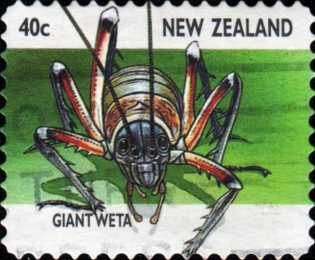 spp: NEW ZEALAND - CIRCA 1997  A stamp printed in New Zealand shows giant weta  Deinacrida spp  , circa 1997  Stock Photo