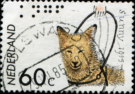 NETHERLANDS - CIRCA 1985  A stamp printed in the Netherlands honoring 50th Anniversary of Royal Dutch Guide-Dog Fund, shows Sunny, First Dutch Guide-Dog, circa 1985 photo
