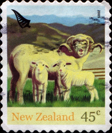 NEW ZEALAND - CIRCA 2005  A stamp printed in New Zealand shows sheeps, circa 2005 photo