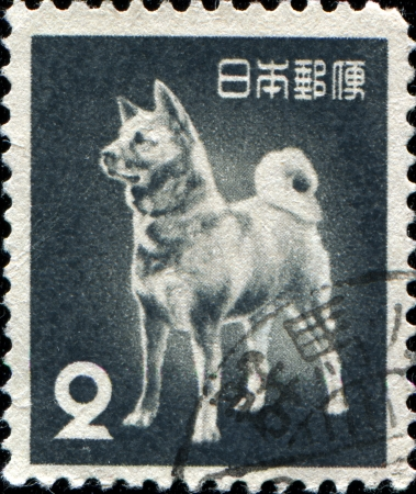 price cutting: JAPAN - CIRCA 1989  A stamp printed in Japan shows dog breed Akita Inu, circa 1989  Stock Photo