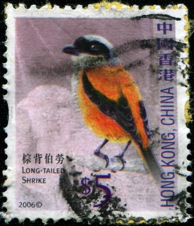 HONG KONG - CIRCA 2006  A stamp printed in Hong Kong, China shows Long-tailed Shrike or Rufous-backed Shrike - Lanius schach, circa 2006 photo
