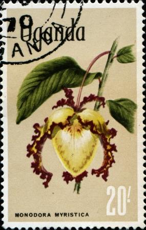 UGANDA - CIRCA 1969  A stamp printed in Uganda shows Calabash nutmeg - monodora myristica, circa 1969  photo