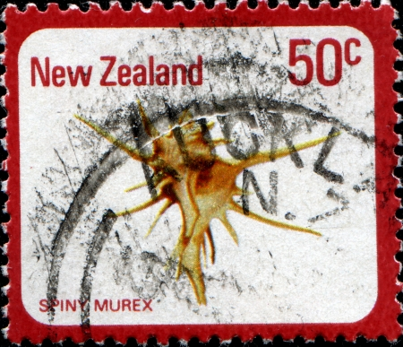murex shell: NEW ZEALAND - CIRCA 1978  A stamp printed in  New Zealand shows sea shell, Spiny murex, circa 1978