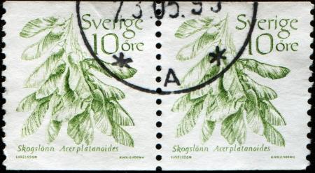 acer platanoides: SWEDEN - CIRCA 1983  A stamp printed in Sweden shows Norway Maple - Acer platanoides, circa 1983