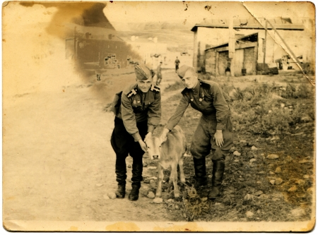 sergeant: USSR - CIRCA 1949  Sergeant and soldier the Soviet Army stroked the calf Ahaltsike, Georgia, circa 1949