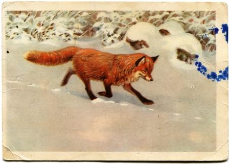 USSR  - CIRCA 1965  Postcard printed in the USSR shows picture of the artist Trofimov - Fox, circa 1965