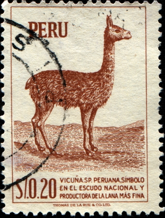 alpaca: PERU - CIRCA 1952  A stamp printed in Peru shows llama - Lama glama, circa 1952