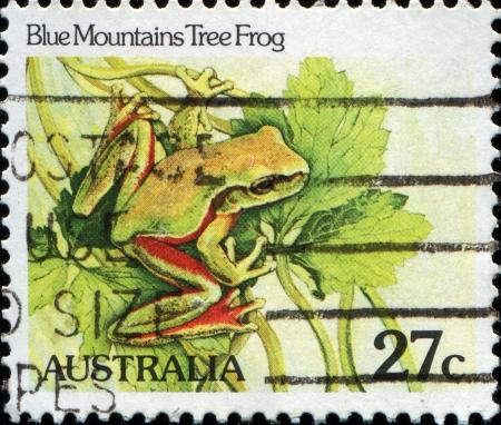 blue mountains tree frog:  AUSTRALIA - CIRCA 1982  A stamp printed in Australia, shows the Blue Mountains Tree Frog  Litoria citropa , circa 1982  Editorial