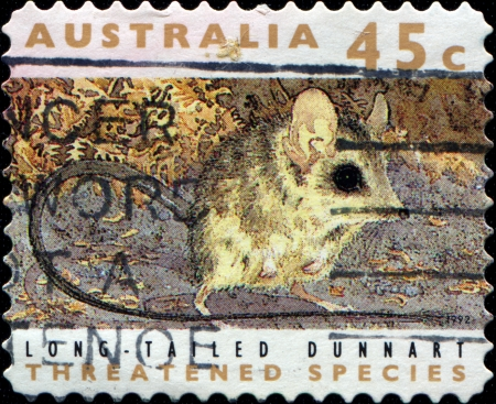 threatened:  AUSTRALIA - CIRCA 1992  stamp printed in Australia dedicated to threatened species, shows long-talied dunnart, circa 1992