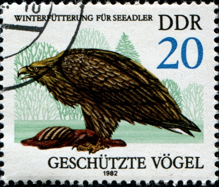 GERMANY - CIRCA 1982  A stamp printed in German Democratic Republic  shows White-tailed sea eagle, circa 1982