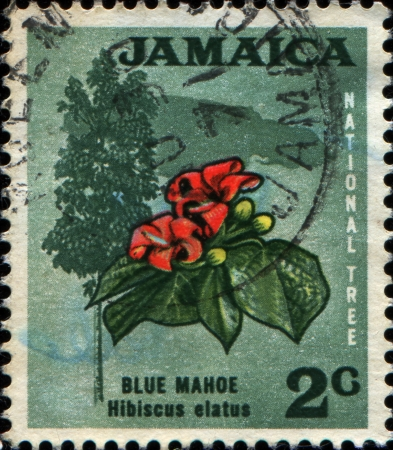 JAMAICA - CIRCA 1969  A stamp printed in Jamaica shows blue mahoe -  hibiscus elatus , circa 1969