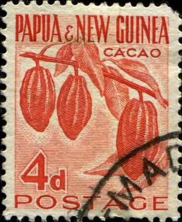 eudicots: PAPUA NEW GUINEA - CIRCA 19520  A stamp printed in Papua New Guinea shows  cacao plant, circa 1952