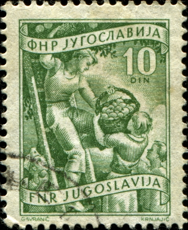 yugoslavia: YUGOSLAVIA - CIRCA 1950  A stamp printed in Yugoslavia shows people colelcting apple, circa 1950
