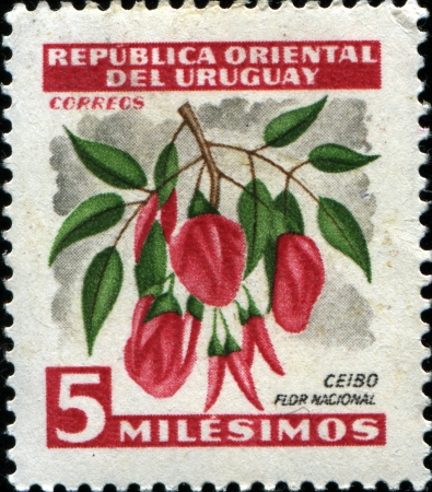 androecium: URUGUAY - CIRCA 1954  A stamp printed in  Uruguay shows National Flower Ceibo, circa 1954  Editorial
