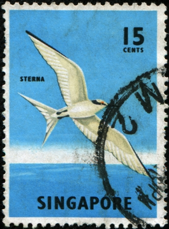 stempeln:  SINGAPORE - CIRCA 1966: A stamp printed in Singapore shows  Black-naped Tern bird - Sterna sumatrana, circa 1966.