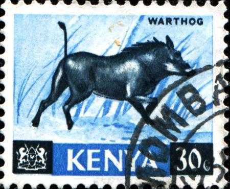 KENYA - CIRCA 1964  A stamp printed in Kenya shows warthog, circa 1964 Stock Photo - 17722525