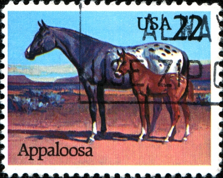 USA - CIRCA 1985  A stamp printed in the United States of America shows Appaloosa horse, circa 1985