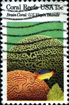 USA -CIRCA 1980  A stamp printed in United States of America shows Brain Coral, US Virgin Islands, Circa 1980 photo