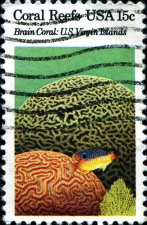 brain coral: USA -CIRCA 1980  A stamp printed in United States of America shows Brain Coral, US Virgin Islands, Circa 1980