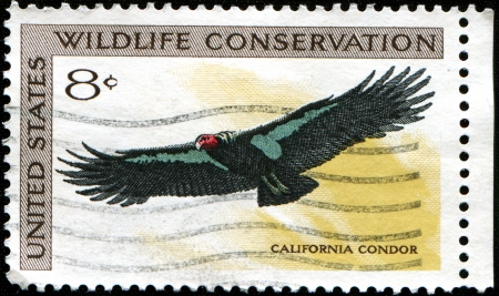 USA - CIRCA 1971  A stamp printed in the United States of America shows california condor, circa 1971 photo