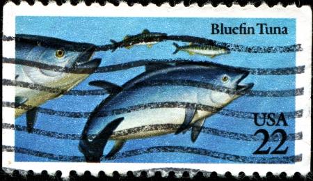 atun rojo: EE.UU. - CIRCA 1986 Un sello impreso en Estados Unidos muestra el at�n rojo, alrededor de 1986
