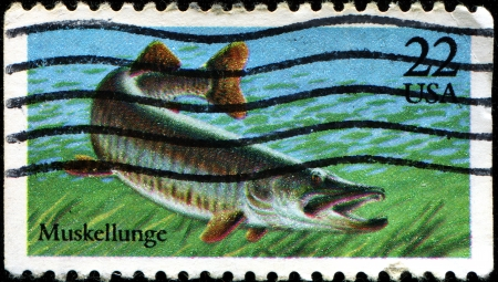 limnetic: USA - CIRCA 1986: A stamp printed in United States of America shows Muskellunge, Fish series, circa 1986