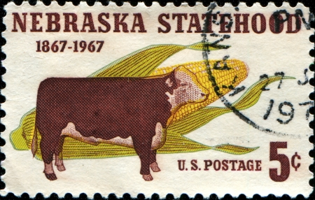 statehood: USA - CIRCA 1967  A stamp printed in United States of America shows Hereford Steer and Corn, Nebraska Statehood Centenary, circa 1967  Editorial