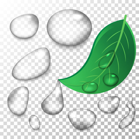 Realistic water drops with blending mode set for perfect results on raster images.  イラスト・ベクター素材