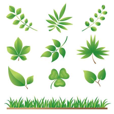 Green Grass and Leaves Collection  Stock Vector - 8703794