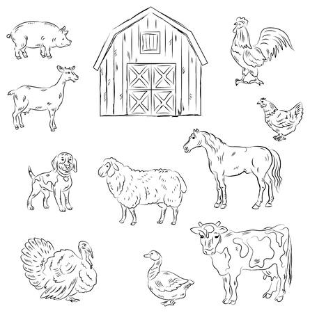 cavie: Animali da fattoria Vettoriali