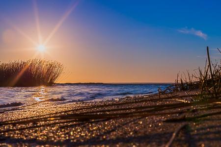 sea grass: Sunrise with warm yellow sea grass at the coastline