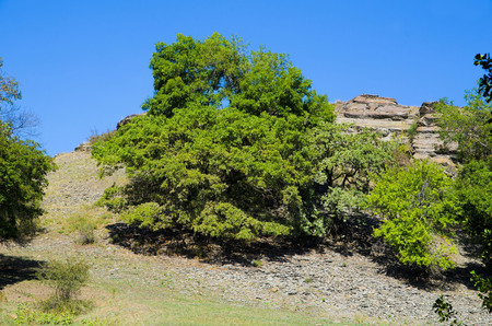 The trees grow at the foot of the cliff.