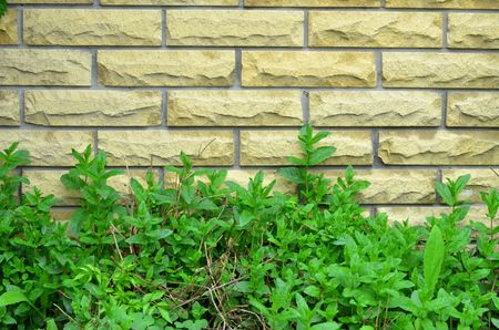 fagot: The lower part of the brick wall is buried in green vegetation.