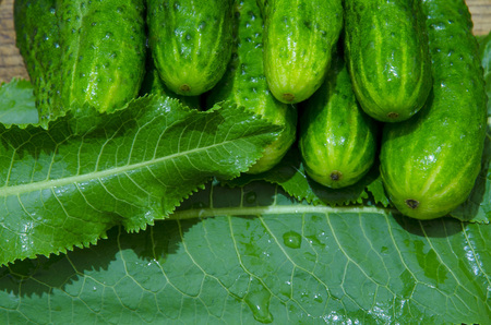 Green cucumbers are stacked on horseradish leaves.
