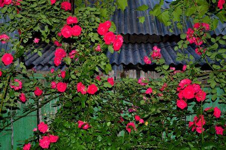 Slate roofs and a fence. Zdjęcie Seryjne