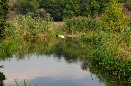 The water surface of a flat river and a swimming white swan.