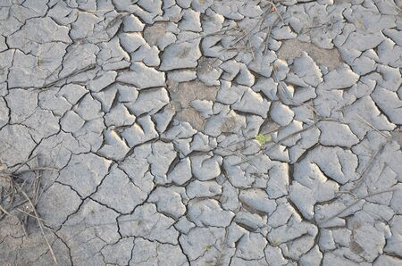 The background consists of a dried fissured bottom of a coal slurry sump.