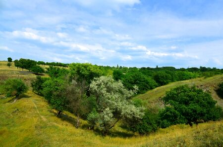 The picturesque landscape consists of trees growing in mountainous terrain. Zdjęcie Seryjne