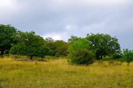 The natural landscape consists of trees growing in the steppe.