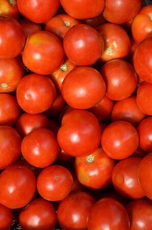 A lot of ripe tomatoes as a background. Zdjęcie Seryjne