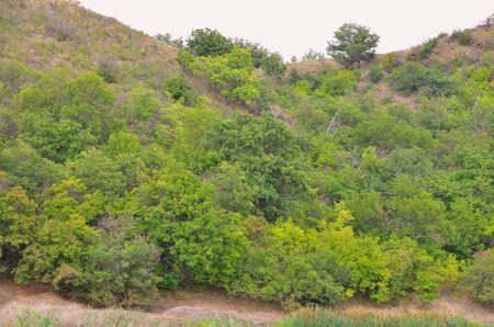 Mountain in dense green vegetation.