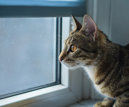 cat sitting on a windowsill and looking at rain out the window. Drops are on the window