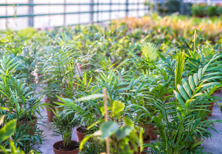 Shop of plants and flowers for selling in plant nursery