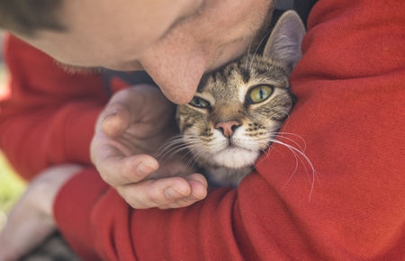 Man holding strret homeless cat Stock Photo