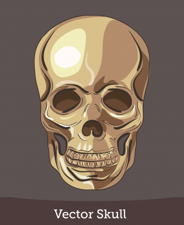 vector ink skull Stock Vector - 19730213